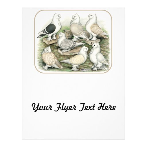 Classic Frill Pigeons Satinettes Custom Flyer