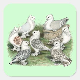 Classic Frill Pigeons Square Sticker