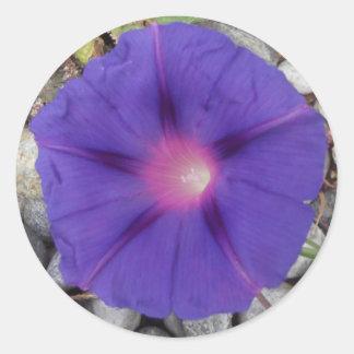 Classic Round Purple Morning Glory Sticker