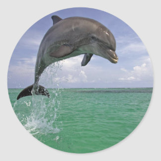 Classic Round Sticker, Glossy Dolphin in the wild Round Sticker