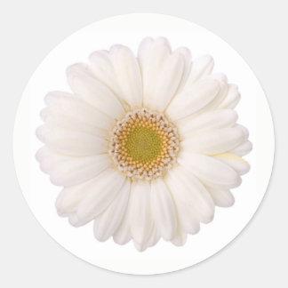 Classic White Gerbera Daisy Flower Classic Round Sticker