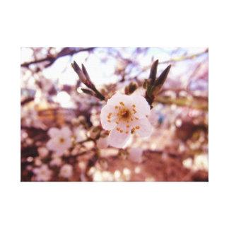 Classic White & Golden Delicate Precious Blossom Canvas Print