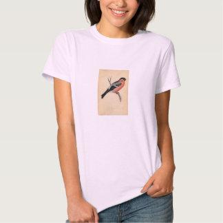 Classic Zoological Etching - Bullfinch Tee Shirt