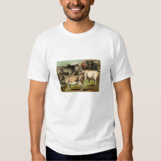 Classic Zoological Etching - Cattle Tees
