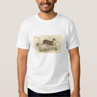 Classic Zoological Etching - Chickara Antelope Tshirts