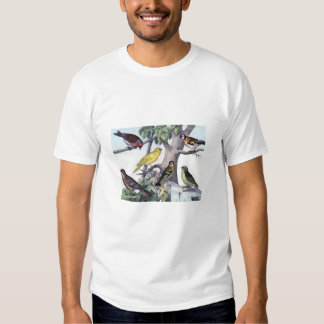 Classic Zoological Etching - Finches Tees