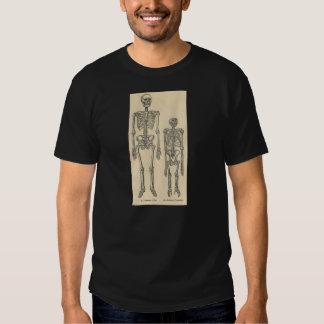 Classic Zoological Etching - Human & Chimpanzee Tee Shirt