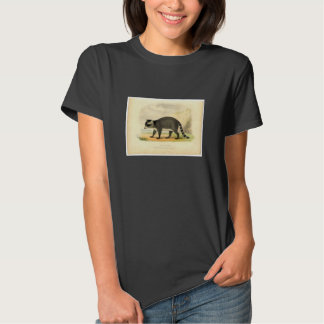 Classic Zoological Etching - Raccoon Tee Shirt