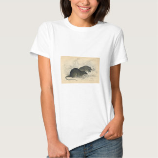 Classic Zoological Etching - Rats Tee Shirts