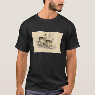 Classic Zoological Etching - Salt's Antelope T-Shirt