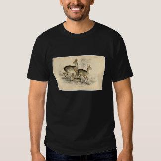 Classic Zoological Etching - Salt's Antelope Tshirts