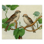 Classic Zoological Etching - Sparrows Poster