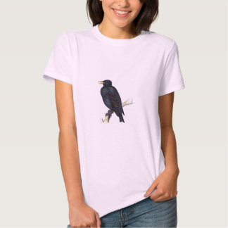 Classic Zoological Etching - Starling Shirts