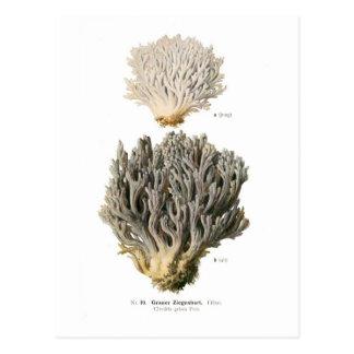 Clavaria grisea post cards
