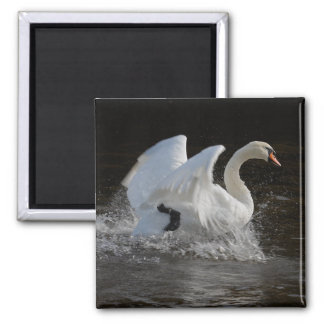 Clean Swan Magnets