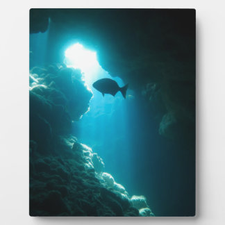 Clear blue cave and fish display plaque