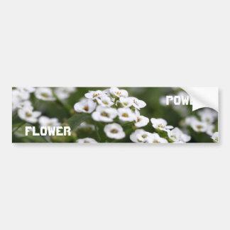 clear crystal white alyssum bumper sticker