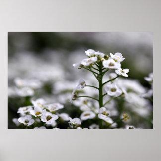 clear crystal white alyssum print