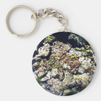 Clear Waters Basic Round Button Key Ring