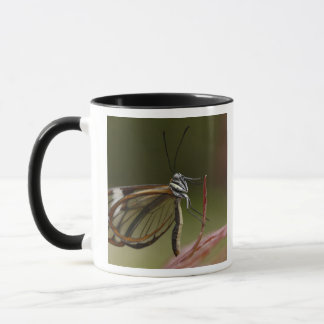 Clear-winged Butterfly Hyalurga sp ?) Cloud 2 Mug
