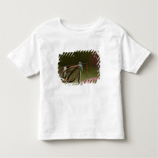 Clear-winged Butterfly Hyalurga sp ?) Cloud 2 Toddler T-Shirt