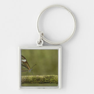Clear-winged Butterfly Hyalurga sp ?) Cloud Key Ring