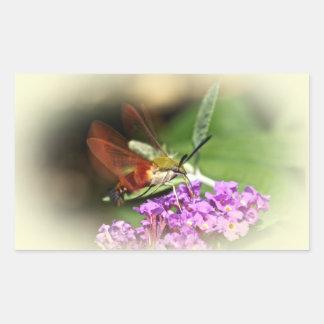 Clearwing Hawk Moth - Hemaris thysbe Rectangular Sticker