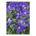 CLEMATIS, BLUE GREETING CARDS