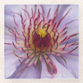 Clematis Flower Glass Coaster