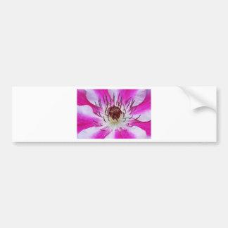 Clematis Flowers Flower Plant Garden Bumper Sticker
