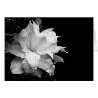 Clematis H 3 Blank Note Card Condolences Sympathy