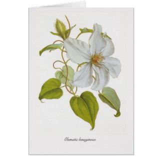Clematis lanuginosa card