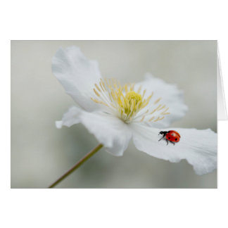 Clematis montana with ladybird card