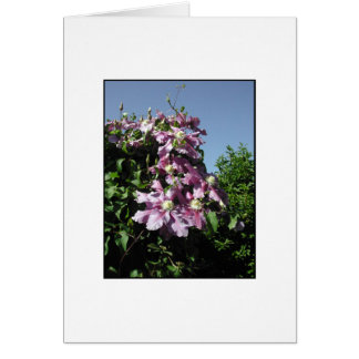 Clematis. Pink Flowers, and blue sky. Stationery Note Card