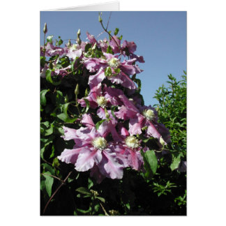 Clematis. Pink Flowers, and blue sky. Greeting Card