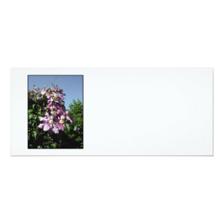 """Clematis. Pink Flowers, and blue sky. 4"""" X 9.25"""" Invitation Card"""