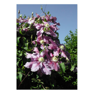 Clematis. Pink Flowers, and blue sky. Pack Of Chubby Business Cards