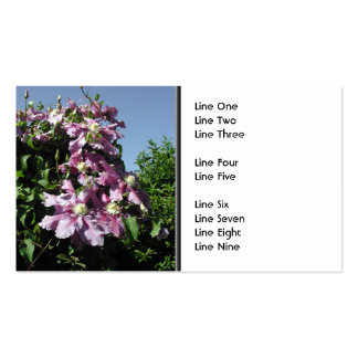 Clematis. Pink Flowers, and blue sky. Pack Of Standard Business Cards