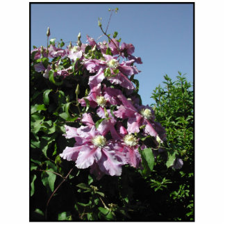 Clematis. Pink Flowers, and blue sky. Acrylic Cut Out