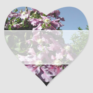 Clematis. Pink Flowers, and blue sky. Sticker
