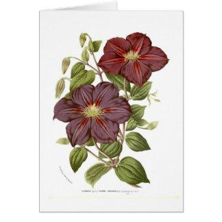 Clematis rubro - violacea card