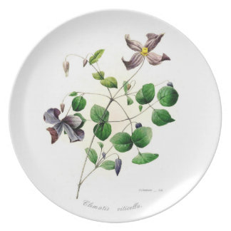Clematis viticella party plate