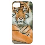 Clemson Tiger Football Cell Phone Cases and Covers Barely There iPhone 5 Case