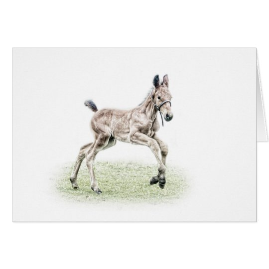 Cleveland Bay Foal Horse Birthday Card