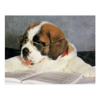 Clever Dog Postcard
