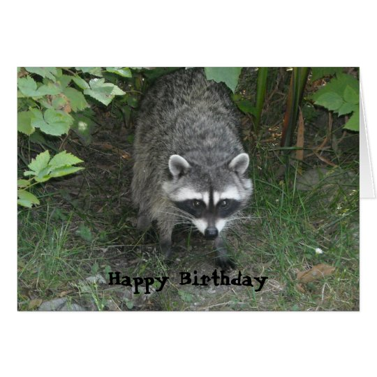 Clever Racoon Birthday Greeting Card