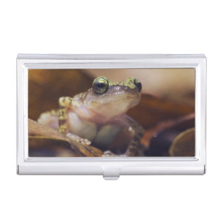 Cliff Chirping Frog, Eleutherodactylus Business Card Holder