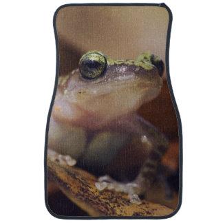Cliff Chirping Frog, Eleutherodactylus Car Mat