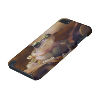 Cliff Chirping Frog, Eleutherodactylus iPod Touch 5G Cases