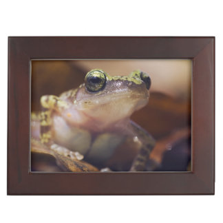 Cliff Chirping Frog, Eleutherodactylus Keepsake Box